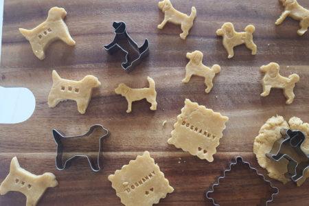 シニア犬がご飯を食べなくて困っているときの解決レシピ集