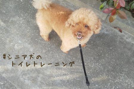 シニア犬のトイレトレーニング