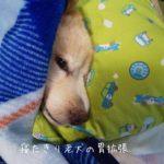 寝たきりの老犬の胃拡張