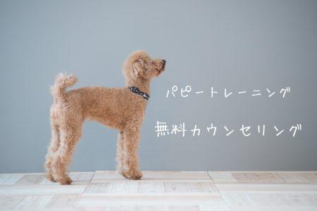 元保護犬パピーくんの無料カウンセリング
