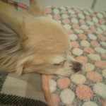15歳闘病中シニア犬長時間シッター