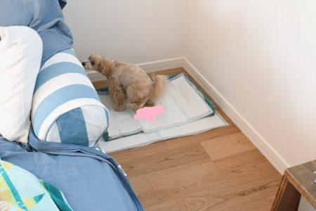 成犬のトイレ再トレーニング【お客様の声】
