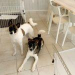 元保護犬さんのトレーニング