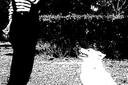 シニア犬トレーニング無料カウンセリング
