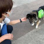 成犬トイレトレーニング